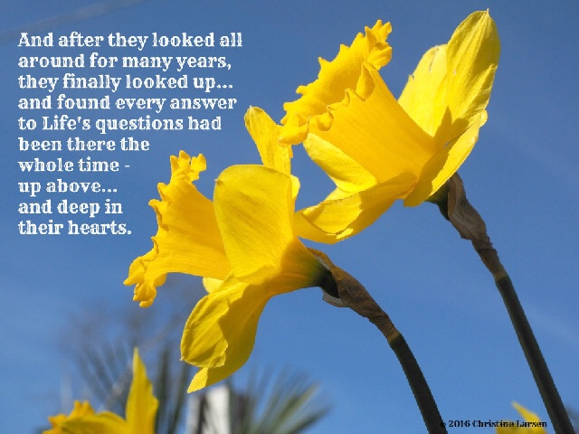 Dancing with Daffodils by #OMP Author, Christine Larsen